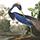 louisiana-heron-menu-icon