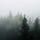 woodland fog wallpaper mural