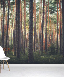 Nature Forest Wallpaper Mural