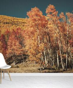 Colorado Autumn Leaves Wallpaper Mural